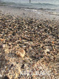 横須賀の観音崎たたら浜で貝拾いが楽しい