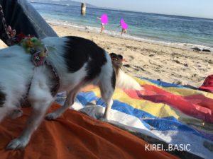 観音崎のたたら浜で愛犬
