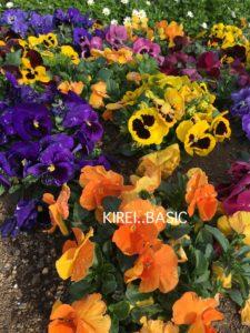 京急油壺マリンパークのお花