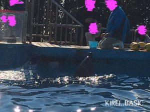 京急油壺マリンパークのいるかのプールで餌やり体験