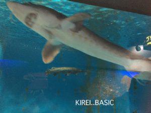 京急油壺マリンパークのサメ