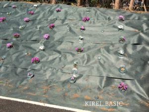 白糸自然公園周辺の花壇