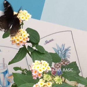 多摩動物公園の蝶と花
