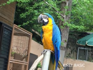 多摩動物公園のインコ