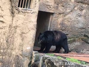 多摩動物公園の熊