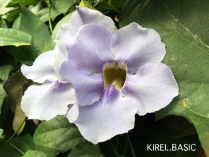 多摩動物公園の昆虫館に咲く花