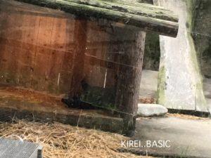 多摩動物公園の動物