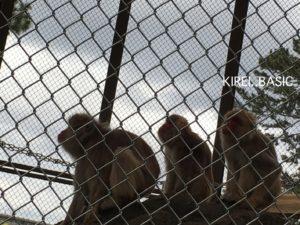 小田原城の側で飼育されている猿