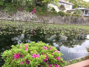 小田原城のお堀に咲くツツジ