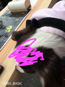 小田原 鱗吉(うろこき)さんはペット同伴可で食べたり飲んだりできる