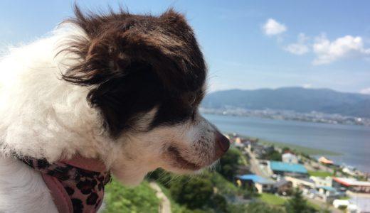 諏訪湖パーキングと愛犬