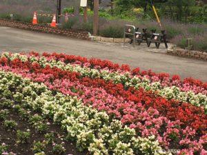 八木崎公園の花壇