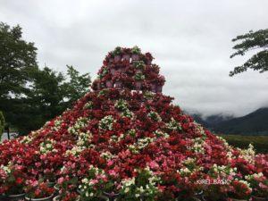 八木崎公園の富士山の形をしたお花