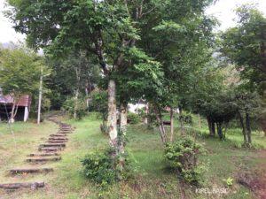 テント張った場所の階段
