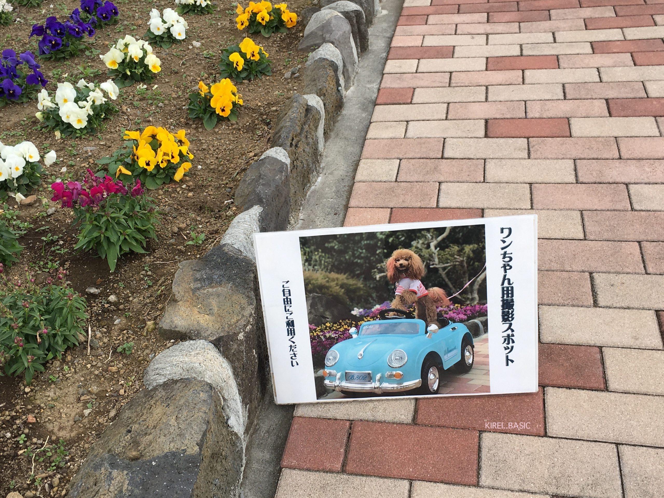 フラワーガーデンの愛犬撮影スポット