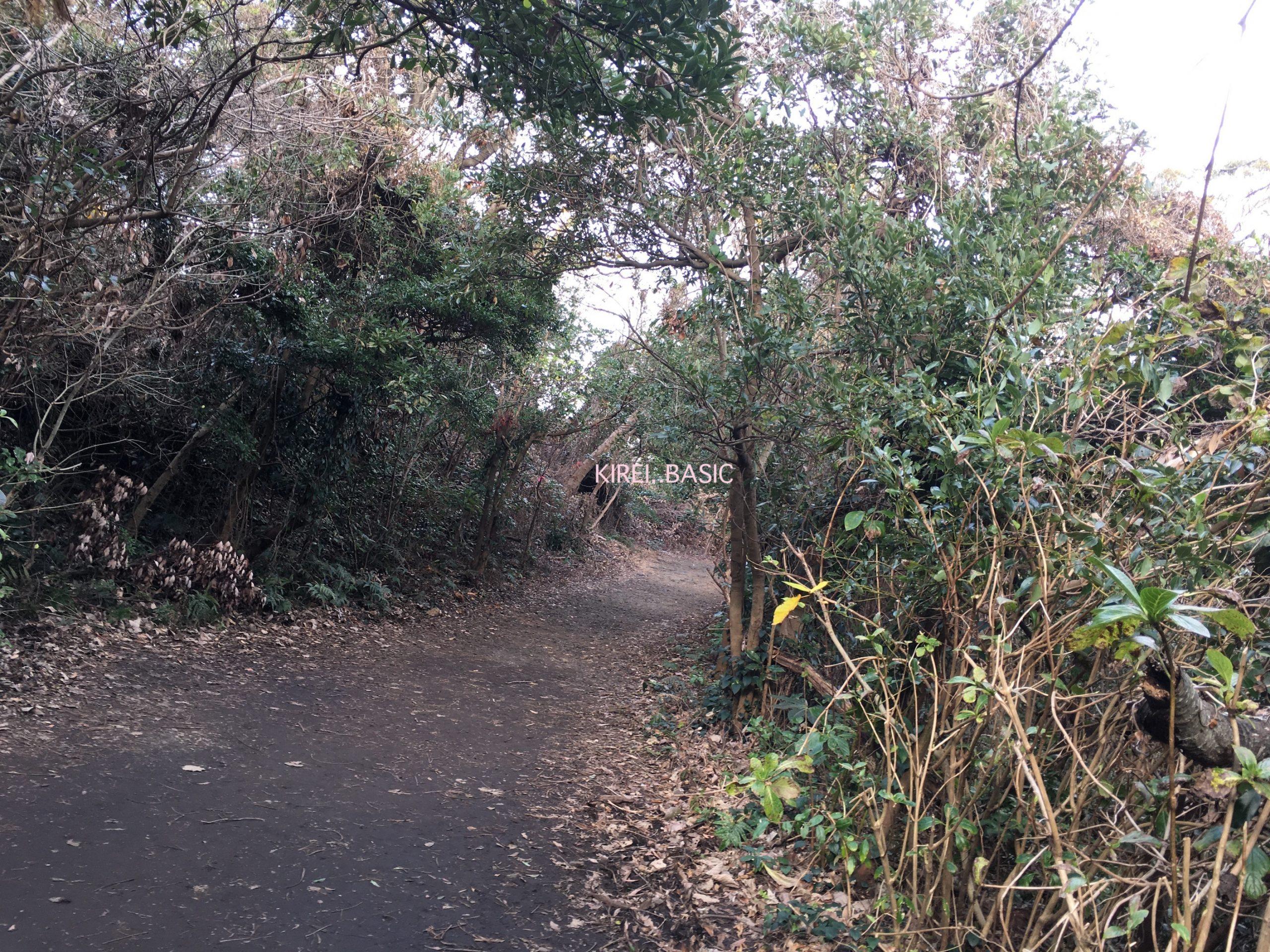 城ヶ崎つり橋の林間コース