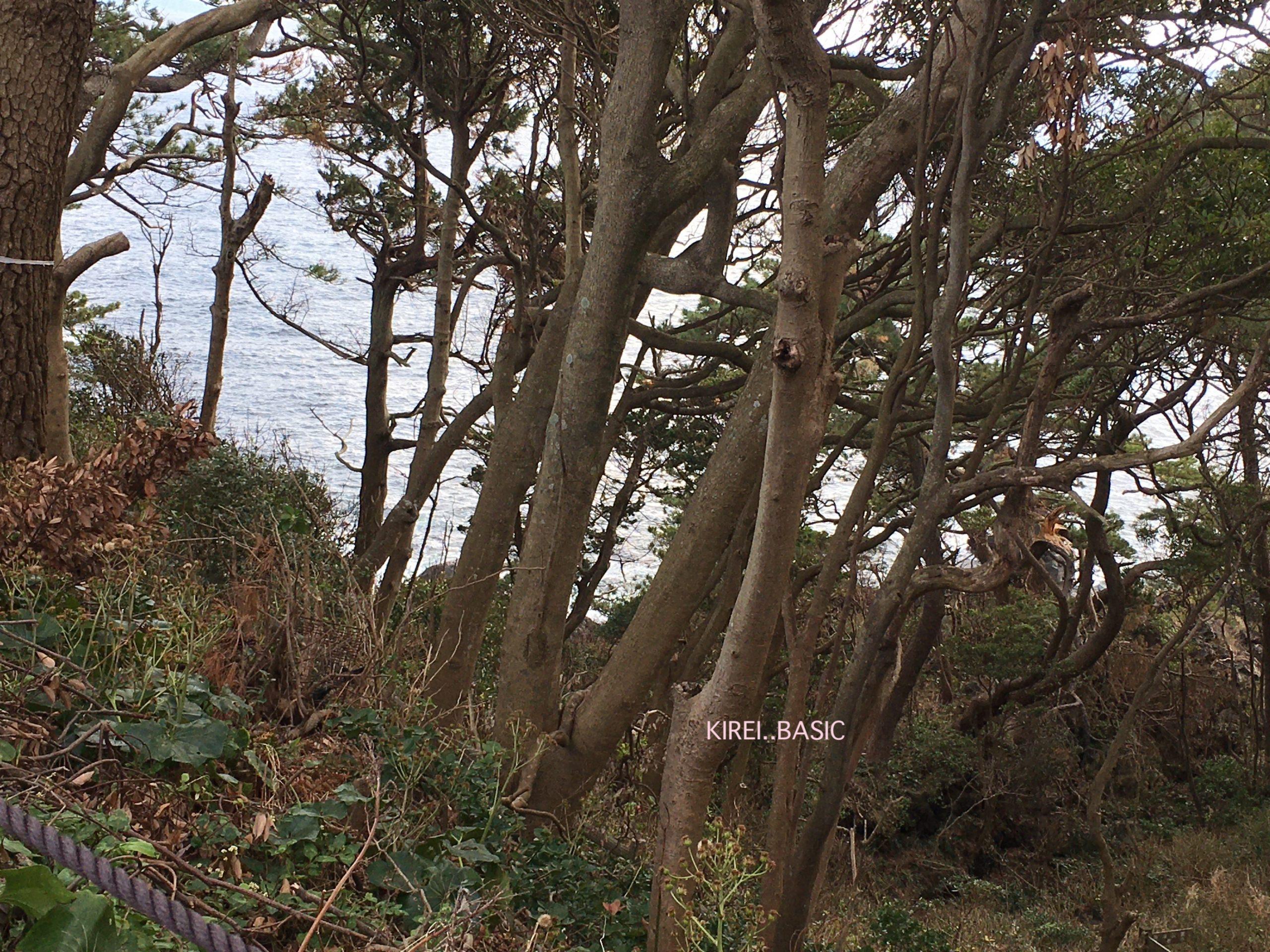 城ヶ崎つり橋の林間コースから見える海