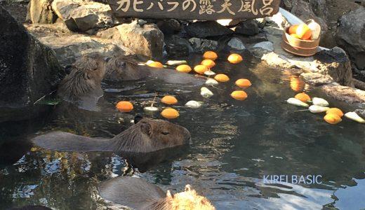 ゆるキャン△聖地の伊豆シャボテン動物公園に行くなら知っておきたい9つの楽しみ方!!